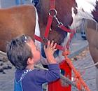 De Notenwei | Activiteiten | Paardenmarkt